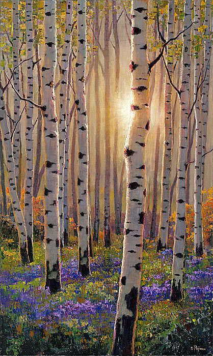 Bob pejman_ Luminous Aspens
